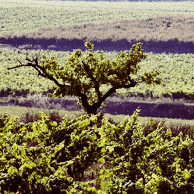 Pago Casa Gran Winery