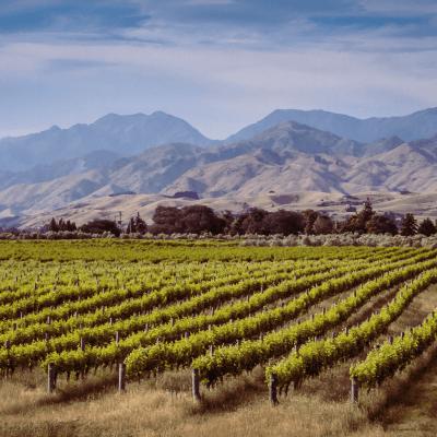 Organic wineries